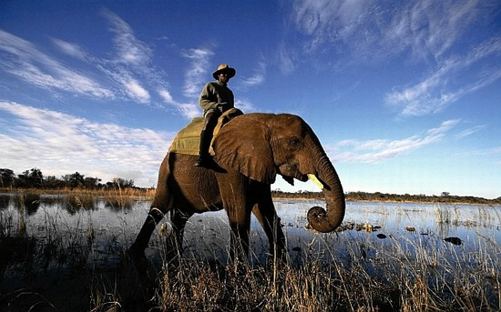 panikbeteg-elefant
