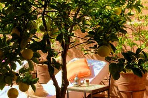 citrom narancs házilag