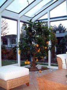 narancsfa termesztés - télikert, terasz